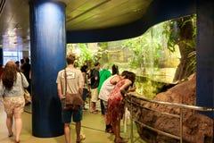 Turisti all'acquario - Barcellona, Spagna Fotografia Stock Libera da Diritti