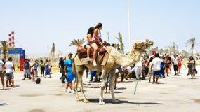 Turisti che camminano sui cammelli nel porto di La Goletta Immagini Stock Libere da Diritti