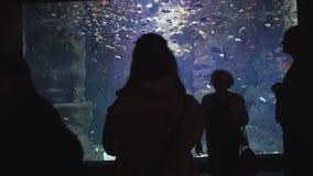 Turisti che guardano sul pesce e sugli squali nel oceanarium gigante archivi video