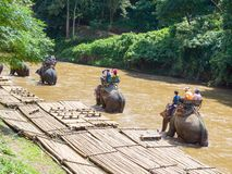 Turisti che guidano sul trekking dell'elefante fotografia stock libera da diritti