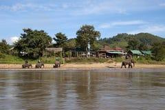 Turisti che prendono giro dell'elefante lungo il fiume con il campo/villaggio nel fondo fotografia stock