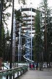 Turisti davanti alla torre dell'allerta di Lipno degli alberi della traccia Fotografie Stock Libere da Diritti
