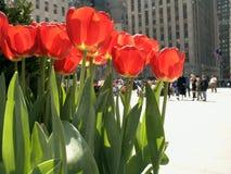 Turisti e tulipani Immagini Stock Libere da Diritti