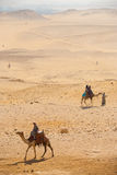 Turisti Giza del deserto del cammello Fotografia Stock