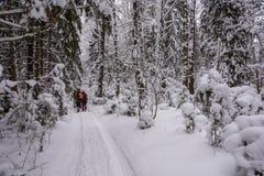 Turisti nel legno nevoso di inverno Fotografia Stock