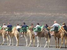 Turisti sui cammelli a Lanzarote, Spagna Fotografia Stock Libera da Diritti