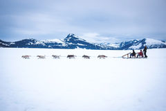 Turisti tirati dal cane di slitta sul ghiacciaio Immagini Stock Libere da Diritti
