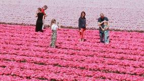 Turisti in un giacimento di fiore in Olanda stock footage