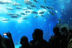 Turisti in un Oceanario stupefacente a Lisbona, Portogallo Fotografie Stock Libere da Diritti