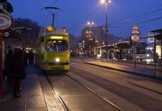 ` Turistico dell'anello del ` del tram di Vienna Immagine Stock