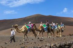 Turistritt på kamel som är Royaltyfria Foton