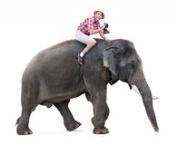 turistritter på en elefant Royaltyfria Bilder