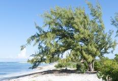 Turk Beach Tree magnífico Foto de archivo libre de regalías