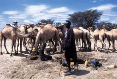 Turkana shepherd royalty free stock photo