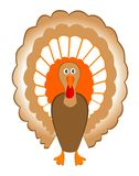 Turkey. Vector turkey for Thanksgiving Day Stock Images