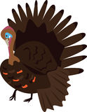 Turkey. An illustration of a male turkey bird Royalty Free Illustration