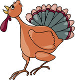 Turkey. Illustrations vector cartoon of Chicken, turkey Royalty Free Stock Photo