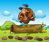 A turkey above a log Stock Images