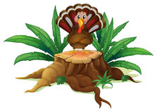 A turkey above the stump Royalty Free Stock Photo