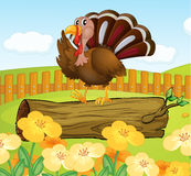 A turkey above the wood inside the fence Stock Image
