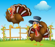 A turkey above the wooden fence and a turkey wearing a hat Royalty Free Stock Photos