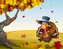 A turkey in an autumn scenery Stock Image