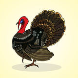 Turkey. Aviculture and poultry. Royalty Free Stock Images