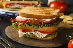 Turkey and Bacon Club Sandwich Stock Photography
