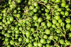 Turkey Berry on Market. royalty free stock photos