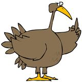 Turkey Bird. This illustration depicts a brown Tom turkey flipping the bird Stock Images