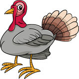 Turkey bird farm animal cartoon Stock Image