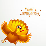 Turkey bird for Happy Thanksgiving Day. Royalty Free Stock Photography