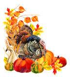 Turkey bird with harvest. Stock Photos