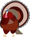 Turkey bird out of Thanksgiving season stock images
