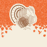 Turkey bird for Thanksgiving day card for text or design Royalty Free Stock Images