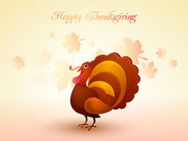 Turkey Bird for Thanksgiving Day celebration. Royalty Free Stock Photo