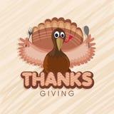 Turkey Bird for Thanksgiving Day celebration. Stock Image