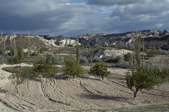 Turkey, Cappadocia. Fields and gardens Cappadocia in Turkey Royalty Free Stock Image