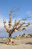 Turkey. Cappadocia. Rocky formations near Goreme. (Gereme) and tree with pots stock images