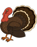 Turkey cartoon Stock Photos