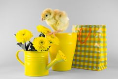 Easter turkey chick on the grey background. Turkey chick on the grey background Stock Photography