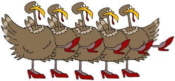 Turkey Chorus Line Royalty Free Stock Image