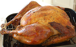 Turkey Close Up Stock Images