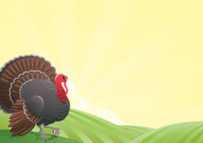 Turkey-cock Royalty Free Stock Image