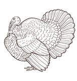 Turkey contour isolated on the white background stock illustration