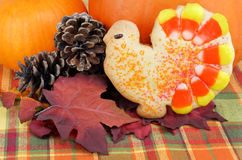 Turkey cookie with pumpkins Stock Image