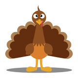 Turkey Cute Cartoon. Cute cartoon Thanksgiving turkey. A illustration of a turkey. Thanksgiving turkey. Illustration of a turkey on white background. Turkey royalty free illustration