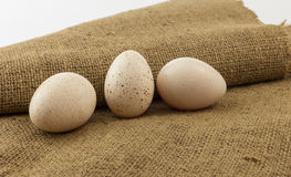 Turkey egg on brown background Stock Photography