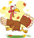 Turkey Escape Cartoon Character Royalty Free Stock Photos