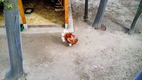 Turkey. On a farm Stock Photography